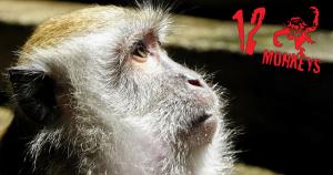 Twelve monkeys, there's no business like monkey business
